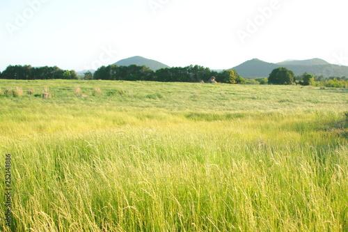 제주 농촌의 풍경이다.