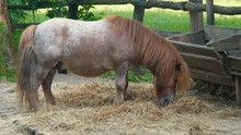 A Small Horse In The Zoo A Pet...