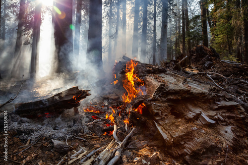 Wild forest fire in Yosemite National Park, California, United States of America. Taken in Autumn season of 2018. - 252169014