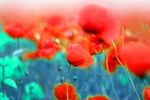 In de dag Poppy Bright retro macro photo of beautiful poppy field