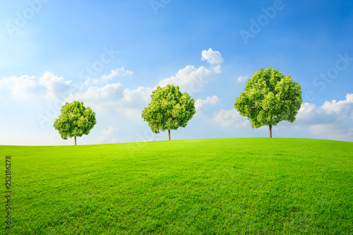 Foto auf AluDibond Lime grun Green tree and grass field with white clouds
