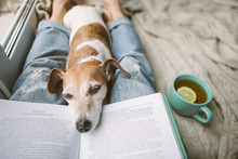 Napping Dog And Book. Perfest ...