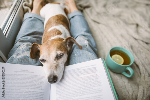Obraz Napping dog and book. Perfest relaxed cozy weekend. Hot tea and interesting book - fototapety do salonu