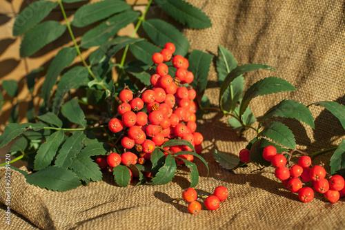 Fotografie, Obraz  Rowan berries on sacking
