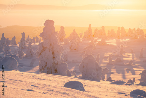 Fotobehang Noord Europa Riisitunturi national park at golden sunrise with silhouette of snow packed trees near Kuusamo in Posio, Finland