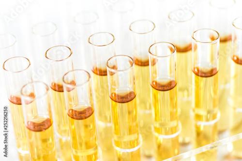 Reagenzgläser mit Flüssigkeit im Labor Canvas-taulu