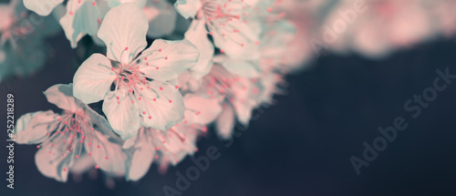 In de dag Macrofotografie Blossom tree over nature background. Spring background.