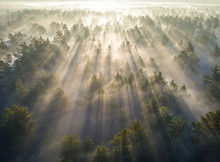 Aerial Shot Of Foggy Forest At...