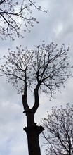 Portrait Of Leafless Dark Tree In Autumn!