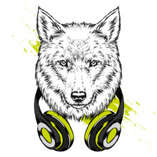 Wolf Hipster In The Headphones...