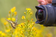 Butterfly Being Photographed