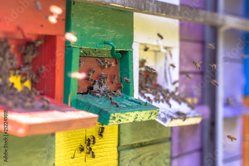 Bees flying to Colorful beehive Canvas Print