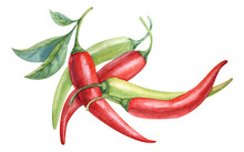 Watercolor Red And Green Chili Pepper