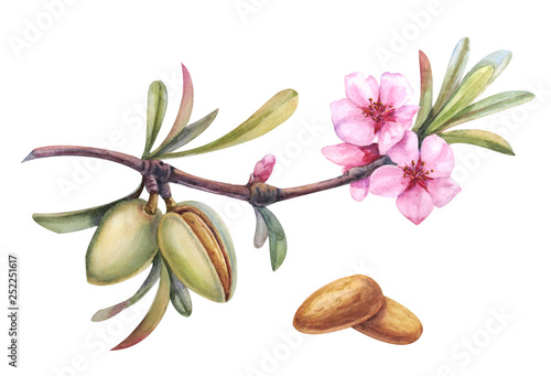 watercolor almond branch Canvas Print