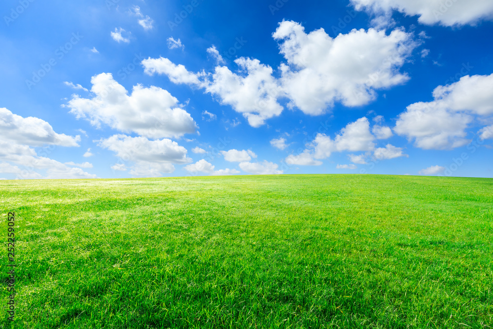 Fototapety, obrazy: Green grass and blue sky with white clouds