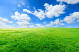 Fototapeta Na sufit - Green grass and blue sky with white clouds