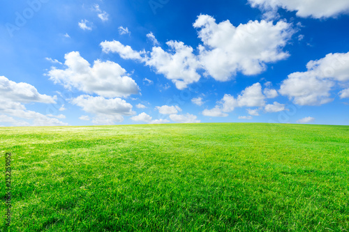 Poster Gras Green grass and blue sky with white clouds