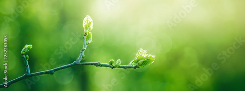 mata magnetyczna Fresh young green leaves of twig tree growing in spring. Beautiful green leaf nature outdoor background with copy space