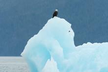 Bald Eagle (Heliaeetus Leucocephalus) Perched On Iceberg In Holkham Bay;  Alaska