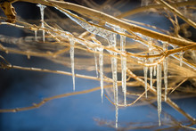 Icicles On Tree Branches