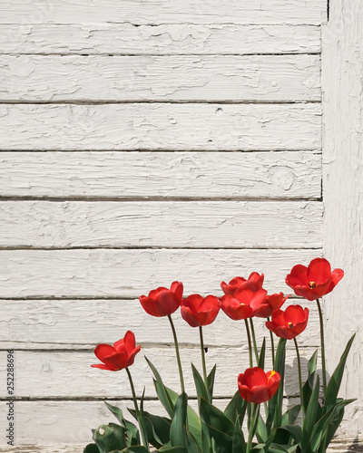 In de dag Poppy red poppies on wooden background