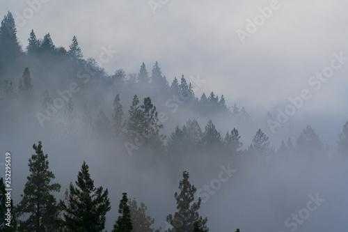 Aluminium Prints Oregon noir: foggy forest