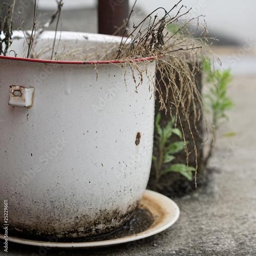 Papel de parede Dead, neglected plant in white metal planter