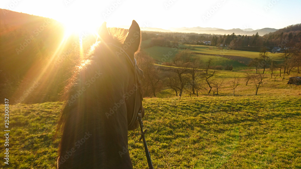 Fototapety, obrazy: SUN FLARE: Golden sunbeams shine on the horse looking around the countryside.