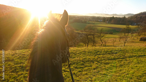 Spoed Foto op Canvas Paarden SUN FLARE: Golden sunbeams shine on the horse looking around the countryside.