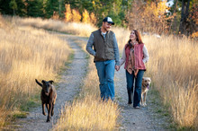 Couple Hold Hands And Walk With Dogs