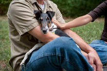 Smooth Fox Terrier Sits In Man's Lap