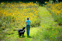 Woman Walks Through Wildflowers With Two Dogs