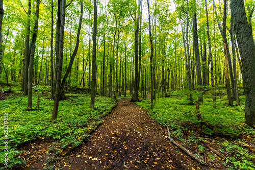 Fototapeten Wald Majestic Forest