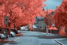 Beautiful View Of Infrared Trees On Sides Of Asphalt Road On Quiet Suburban Street In Linz, Austria