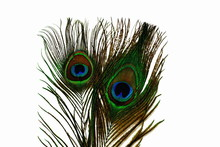 Close Up View Of Gorgeous Colorful Peacock Feather Isolated. Beautiful Backgrounds.