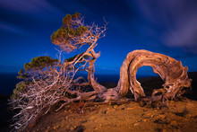Wonderful Illuminated Wood Growing On Top Of Hill And Blue Sky In Evening In Hierro Island, Canary Island, Spain