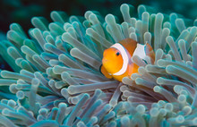 Incredible Underwater World - ...