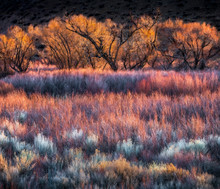 Colorful Trees And Brush Near Bishop, CA