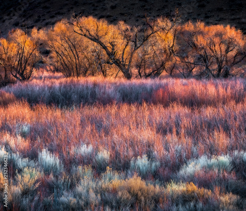 Canvas Print Colorful Trees and Brush near Bishop, CA