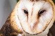owl face in high resolution on white background