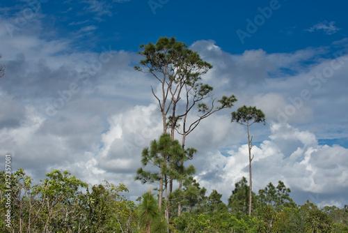 Afrykański Las