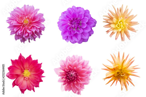Cadres-photo bureau Dahlia Blurred for Background.Beautiful dahlia isolated on the white background. Photo with clipping path.