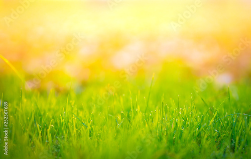 Foto auf Leinwand Lime grun Beautiful grass summer natural landscape with natural light sunset of the sun with dramatic yellow and orange sky. Outdoor travel on wild nature. Relax zone with fresh air and water.