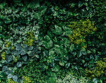 Green Leaf Wall Background Image