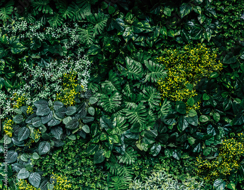 Green leaf wall background image Fototapete