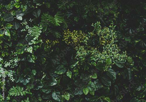 Poster Vegetal Green leaf wall background image