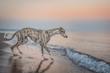 canvas print picture - hübscher Windhund (Whippet) am Strand nach dem Sonnenuntergang