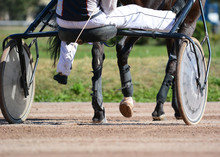 Legs Of A Trotter Horse And Horse Harness. Harness Horse Racing In Details.