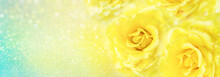 Yellow Roses Flower Soft Roman...