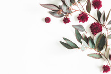 Flowers Composition. Eucalyptus Leaves And Red Flowers On White Background. Flat Lay, Top View, Copy Space